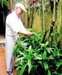 Tác dụng của cây lược vàng trị bệnh vảy nến