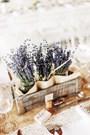 Ý nghĩa của hoa lavender: Sắc tím nhẹ nhàng và thanh lịch